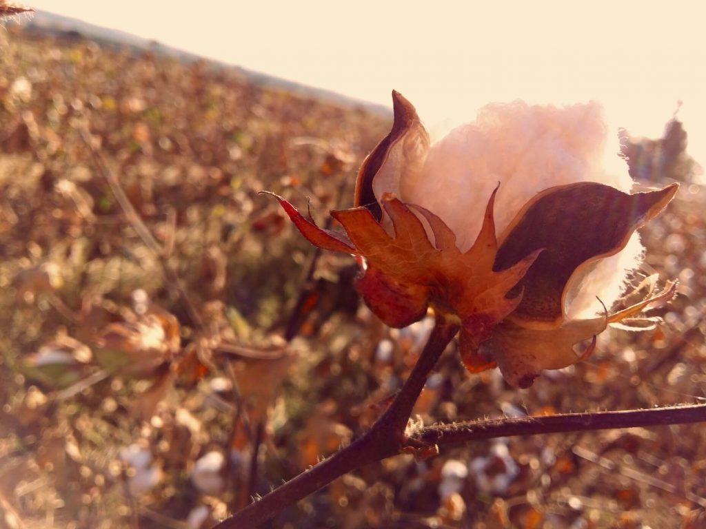 Mars-ELLE tissu biologique organic fabric GOTS jersey couture