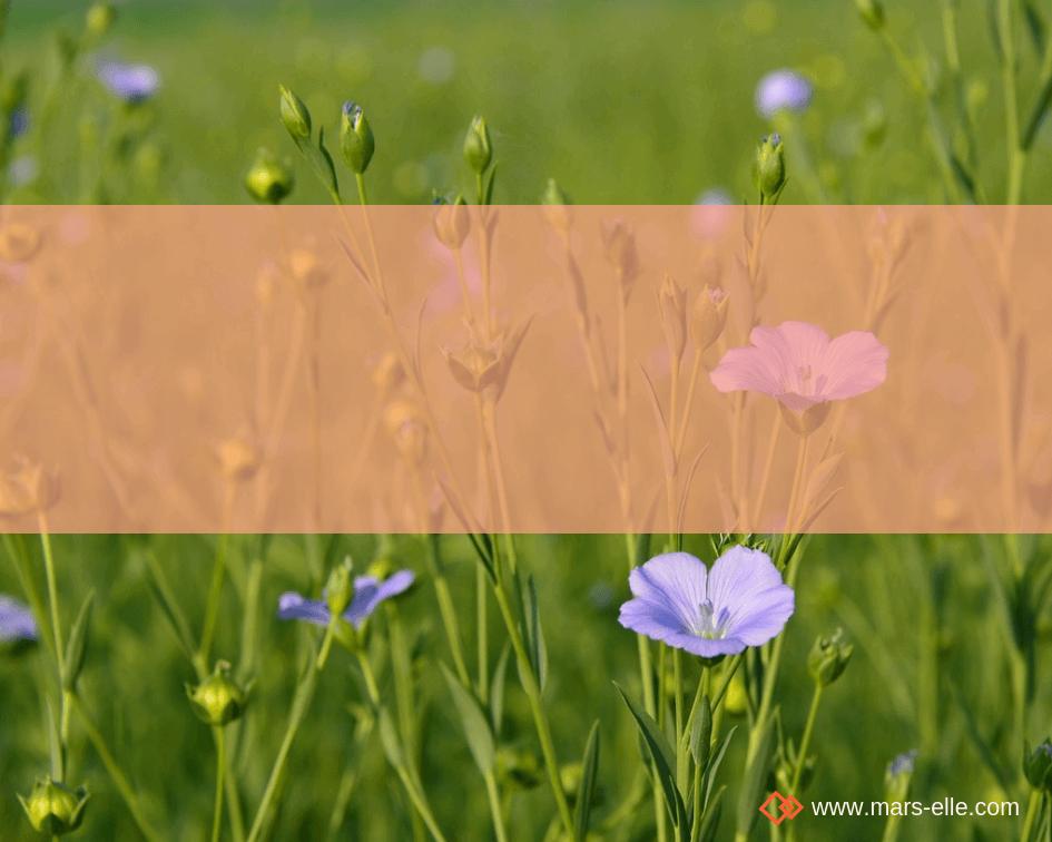 Le Lin: un tissu par nature écologique